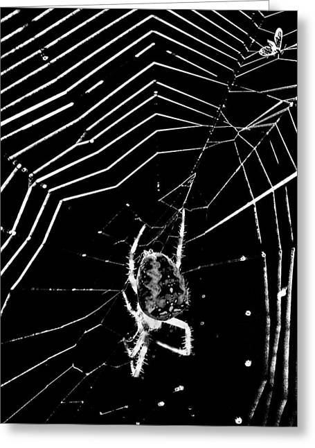 Spider And Fly Greeting Cards - Caught in The web Greeting Card by Darren Burroughs