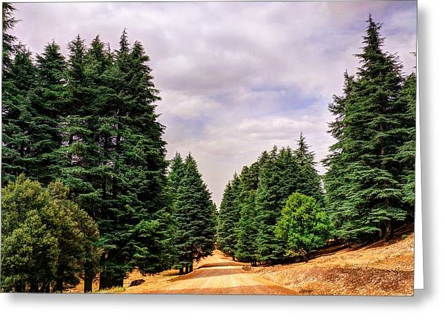 Big Pine Country Greeting Cards - Cedar forest Greeting Card by Ivan Slosar