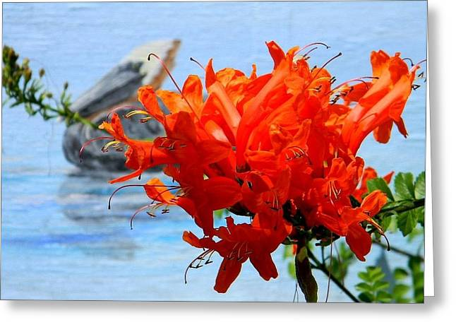 Cedar Key Greeting Cards - Cedar Key Beauty Greeting Card by Warren Thompson