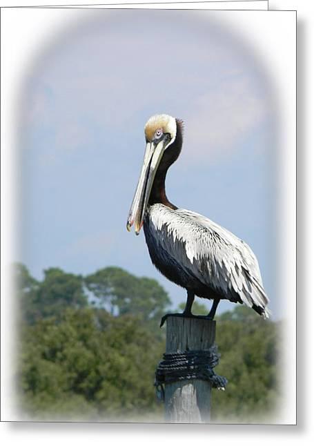 Cedar Key Greeting Cards - Cedar Key Pelican Greeting Card by Warren Thompson