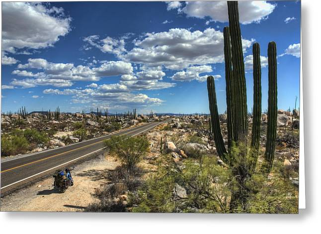 center of the baja Greeting Card by Rich Beer