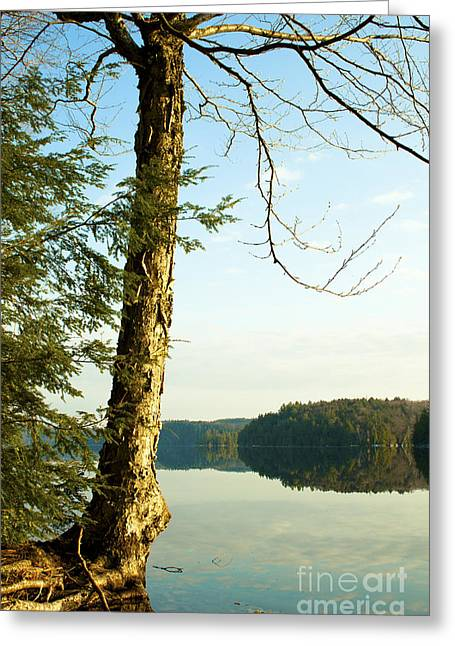Clean Water Greeting Cards - Central Ontario Lake at Sunrise Greeting Card by Gordon Wood
