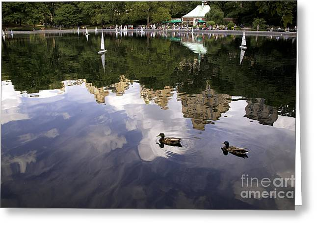 Central Park Pond with Two Ducks Greeting Card by Madeline Ellis