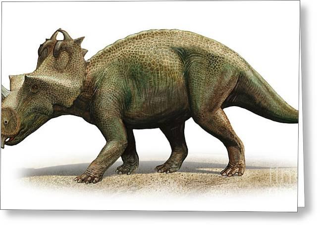 Centrosaurus Apertus, A Prehistoric Era Greeting Card by Sergey Krasovskiy
