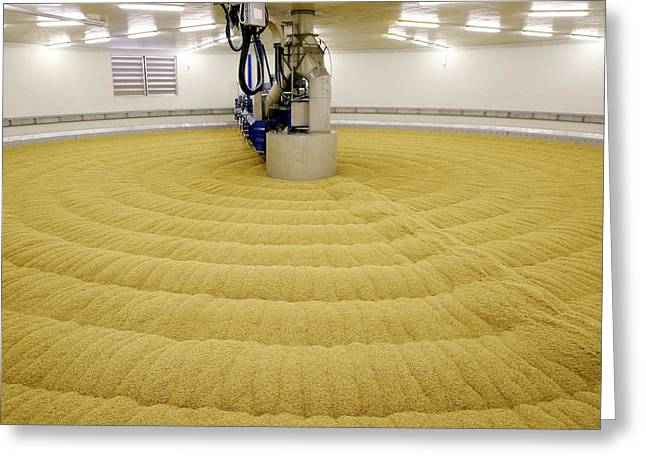 Maltings Greeting Cards - Cereal Grains In A Malthouse Greeting Card by Ria Novosti