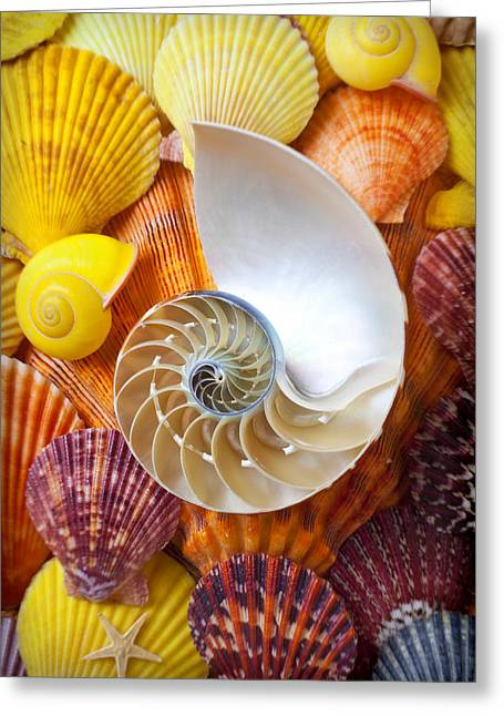 Marine Creatures Greeting Cards - Chambered nautilus  Greeting Card by Garry Gay