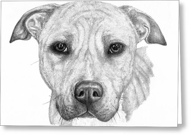 Rescue Drawings Greeting Cards - Chance Greeting Card by Deanna Maxwell