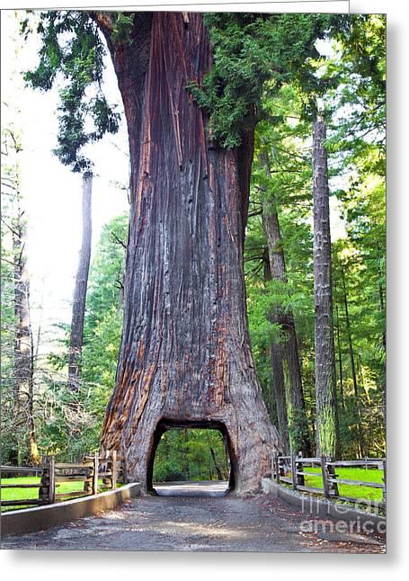 Drive Through Greeting Cards - Chandelier Drive Thru Redwood Tree Greeting Card by David Buffington