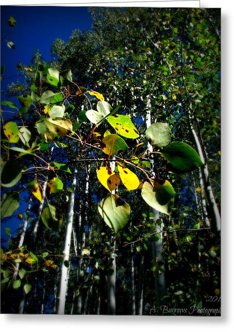 Prescott Greeting Cards - Change in the Young Aspen Greeting Card by Aaron Burrows