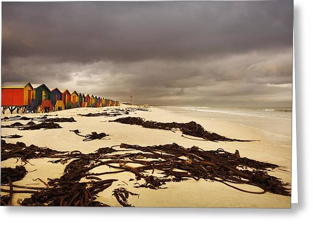 Cape Town Greeting Cards - Changing Huts Along The Beach, Cape Greeting Card by Kristy-Anne Glubish