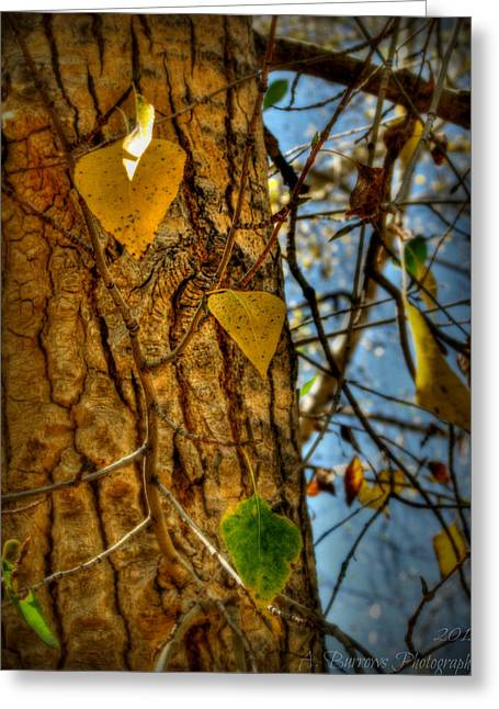 Prescott Greeting Cards - Changing Leaves and a Cottonwood Trunk Greeting Card by Aaron Burrows