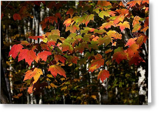 Changing Of The Colors Greeting Card by Rich Franco