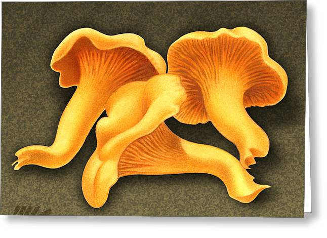 Toadstools Greeting Cards - Chantarelle Mushrooms Greeting Card by Marshall Robinson