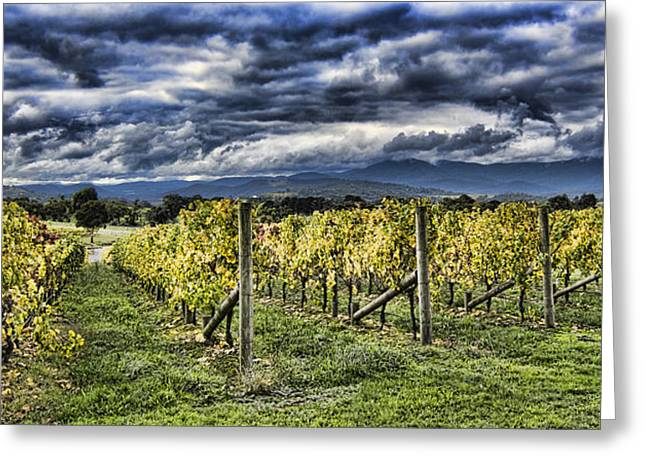 Chardonnay Vines Greeting Card by Douglas Barnard