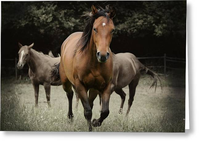 Quarter Horse Digital Art Greeting Cards - Charlie and friends Greeting Card by Jana Goode