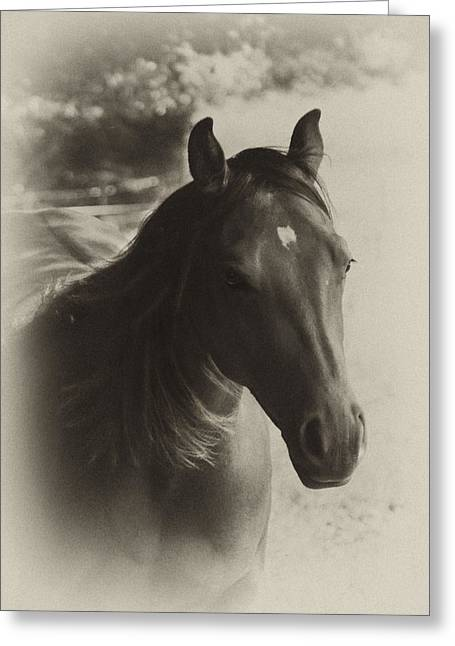 Quarter Horses Greeting Cards - Charlie Greeting Card by Jana Goode
