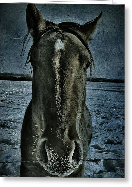 Canada Photograph Greeting Cards - Charlie Greeting Card by Jerry Cordeiro