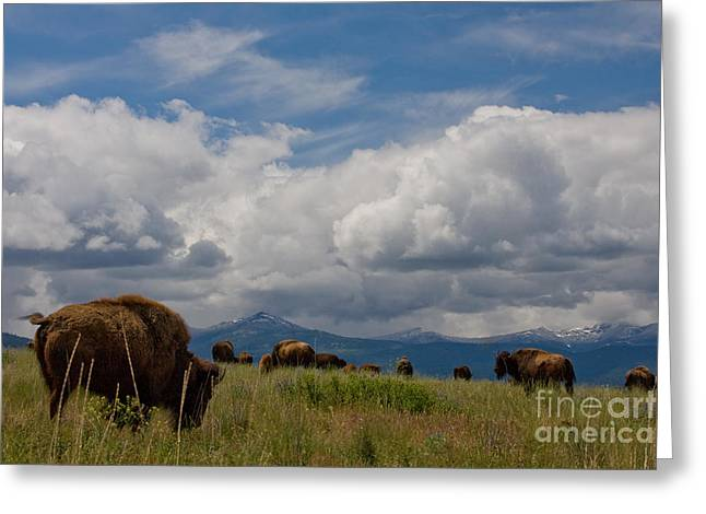 National Bison Range Greeting Cards - Charlie Russel Clouds Greeting Card by Katie LaSalle-Lowery