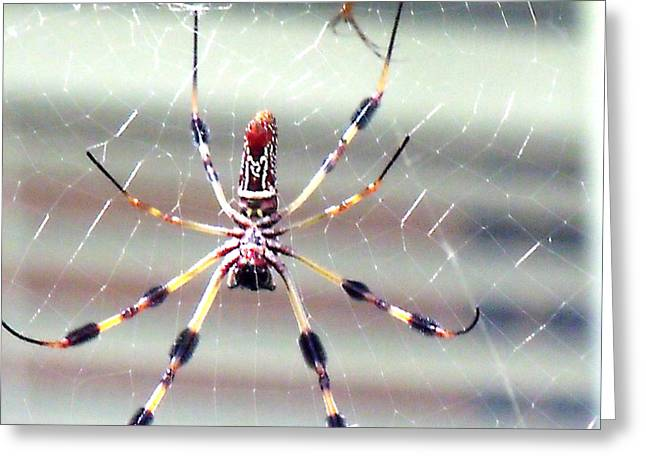 Charlotte's Web Greeting Card by Marilyn Holkham