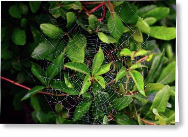 Spiderweb Greeting Cards - Charlottes Web Greeting Card by Rick Berk