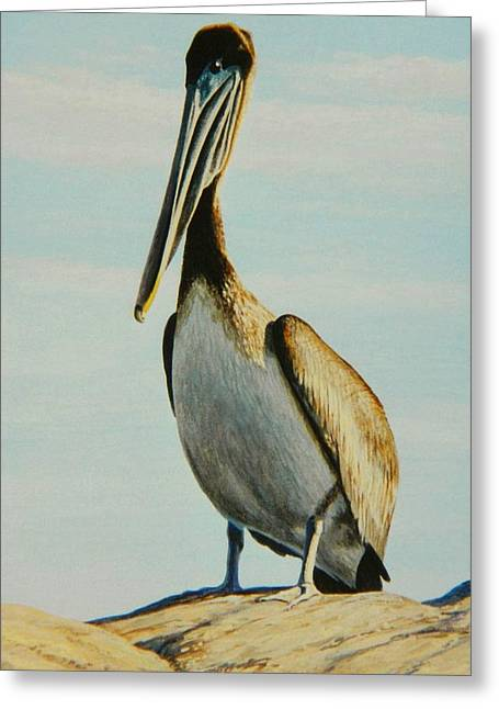 Pelican Paintings Greeting Cards - Charming Charlie Greeting Card by Frank Dalton