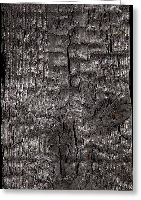 Organic Compound Greeting Cards - Charred Wood Greeting Card by Sheila Terry