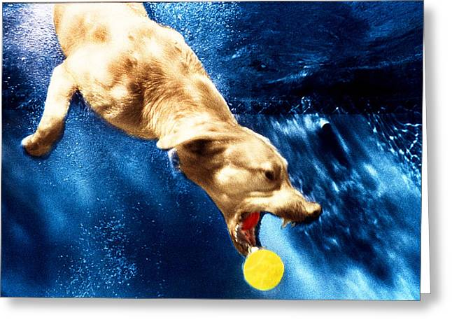 Diving Dog Greeting Cards - Chase Greeting Card by Jill Reger