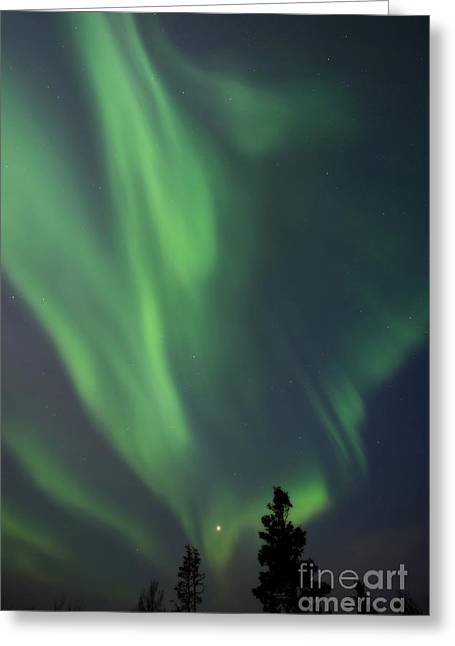 Magic Time Greeting Cards - chasing lights II natural Greeting Card by Priska Wettstein