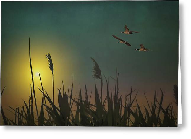 Sunset Posters Greeting Cards - Chasing The Sun Greeting Card by Tom York Images