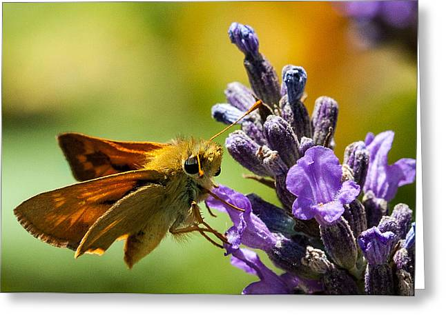 Endearing Greeting Cards - Checking for nectar Greeting Card by Jean Noren