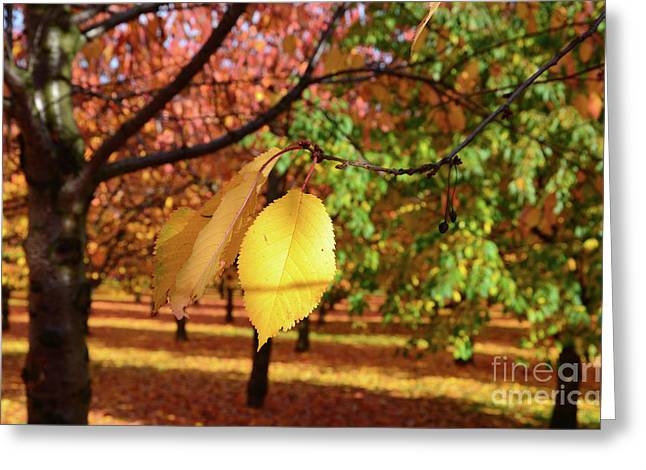 Autumn Sheets Greeting Cards - Cheery Tree Sheet Greeting Card by Bruno Santoro