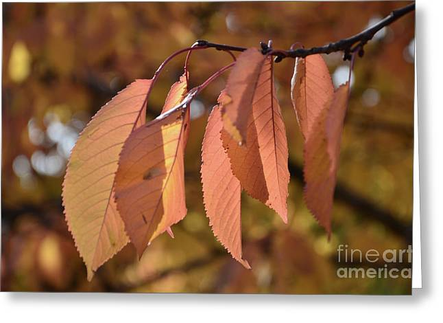 Autumn Sheets Greeting Cards - Cheery Tree Sheets 1 Greeting Card by Bruno Santoro