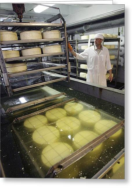 Dairy Factories Greeting Cards - Cheese Production, Drying Room Greeting Card by Ria Novosti