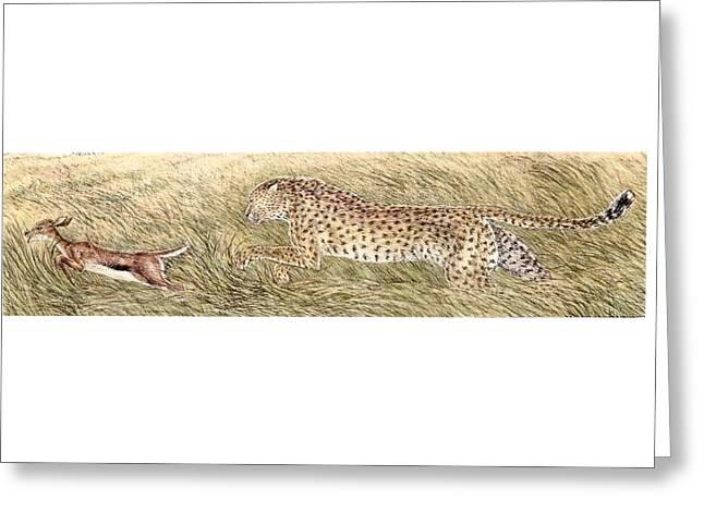 Cheetah And Gazelle Fawn Greeting Card by Tim McCarthy