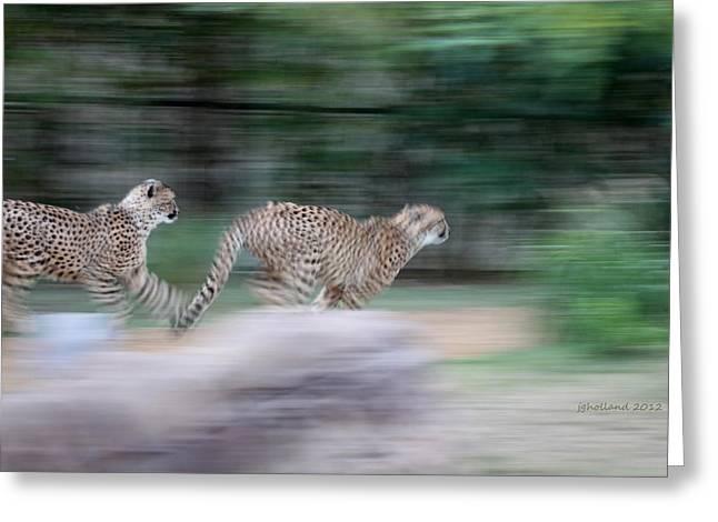 Cheetah Photographs Greeting Cards - Cheetah Chase Greeting Card by Joseph G Holland