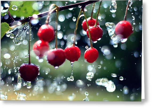 Frucht Greeting Cards - Cherries Greeting Card by Falko Follert
