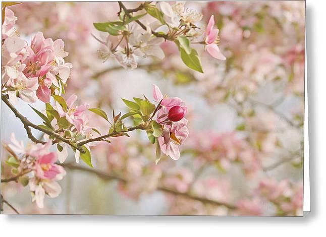 Kim Photographs Greeting Cards - Cherry Blossom Delight Greeting Card by Kim Hojnacki