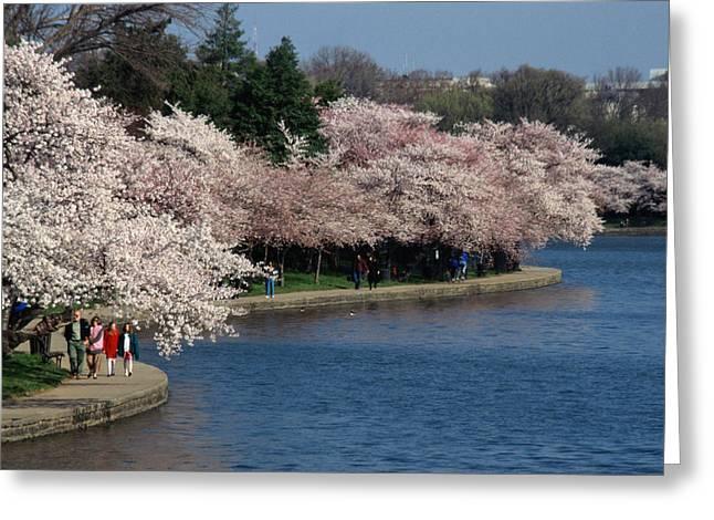 Cherry Blossom Festival, Jefferson Greeting Card by Richard Nowitz