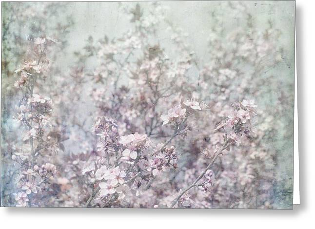 Paul Grand Greeting Cards - Cherry Blossom Grunge Greeting Card by Paul Grand