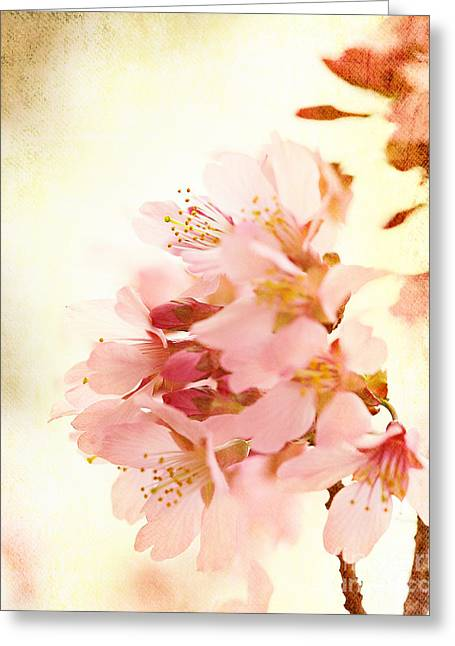 Cherry Blossom Greeting Card by Kim Fearheiley