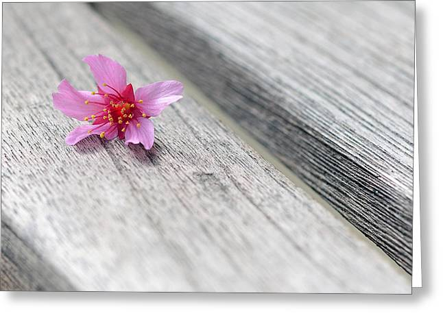 Pink Blossoms Greeting Cards - Cherry Blossom on Bench Greeting Card by Lisa  Phillips