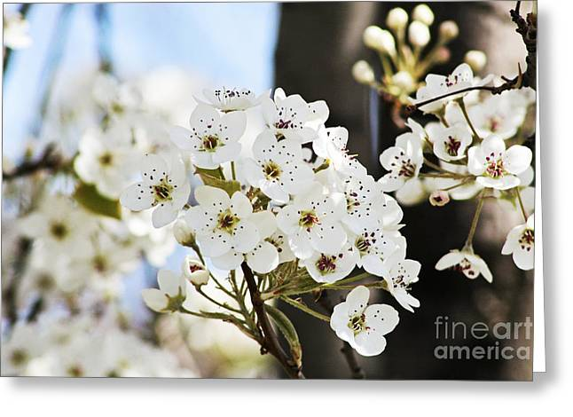 Pamela Gail Torres Greeting Cards - Cherry Blossom Greeting Card by Pamela Gail Torres