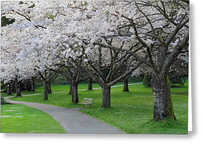 Stanley Park Greeting Cards - Cherry Blossom park Greeting Card by Pierre Leclerc Photography