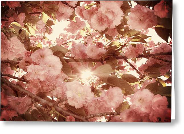 Cherry Blossom Sky Greeting Card by Amy Tyler