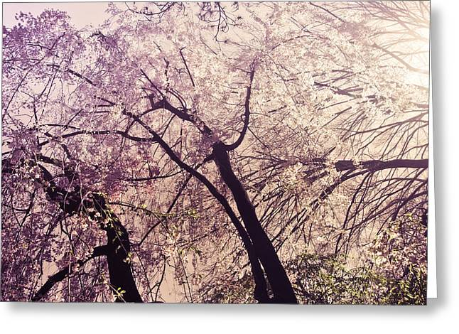 Cherry Blossoms - New York City Greeting Card by Vivienne Gucwa