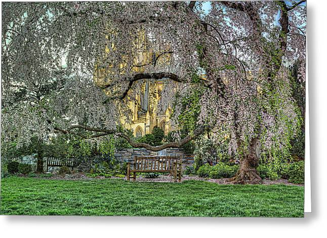 Cherry Blossoms at the Washington National Cathedral Greeting Card by Metro DC Photography