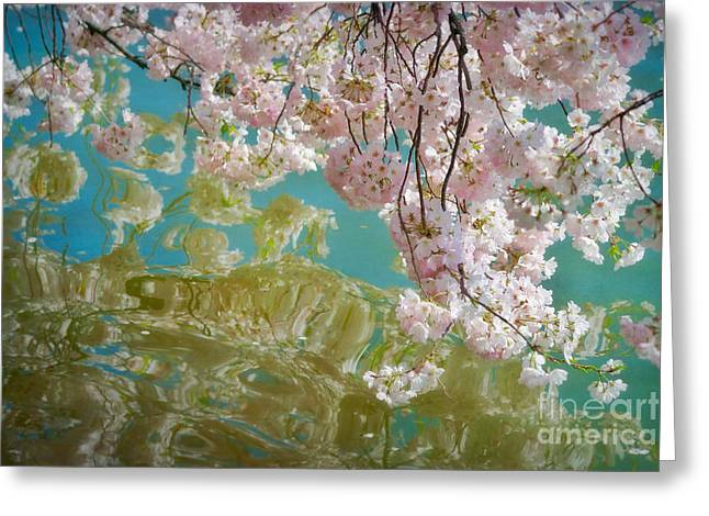 Bough Greeting Cards - Cherry Blossoms Close Up Six Greeting Card by Susan Isakson