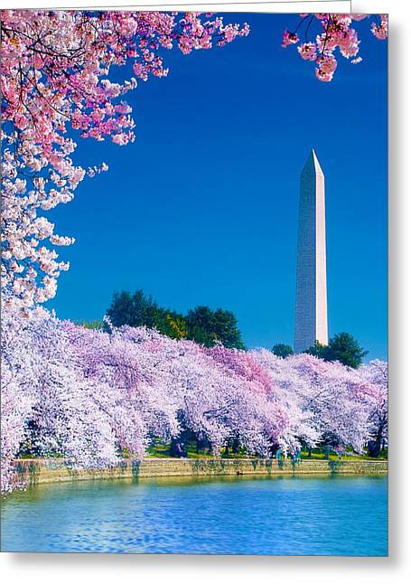 Tidal Basin Greeting Cards - Cherry Blossoms Greeting Card by Don Lovett