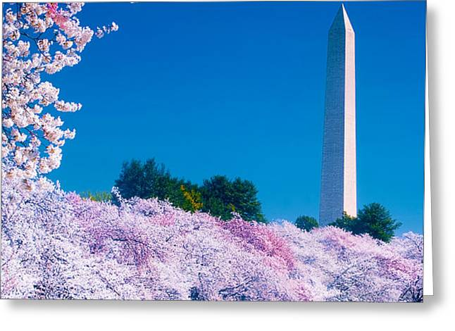 Cherry Blossoms Greeting Card by Don Lovett