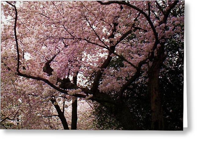 Cherry Blossom Festival Greeting Cards - Cherry Blossoms Greeting Card by Joyce Kimble Smith